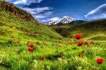 IMG_1339_40_41_tonema_pped2