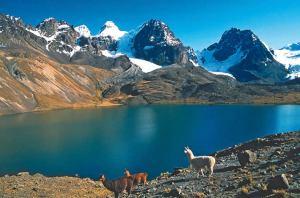 llamas_en_la_cordillera_real_bolivia