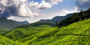 The-tea-plantations-of-Munnar-Kerala