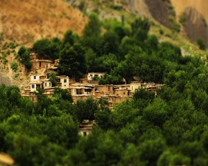 tajikistan - vasica