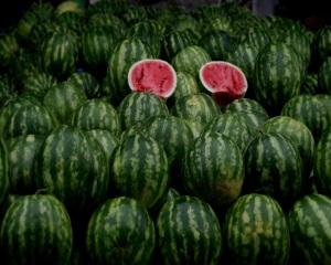 uzbekistan - lubenice