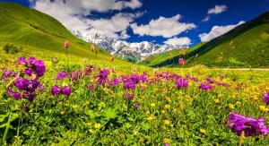 11130417-panorama-of-alpine-meadows-in-the-caucasus-mountains-upper-svaneti-georgia