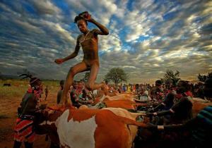 hamer bbull jumping