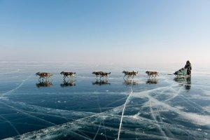 犬ぞりで行くバイカル湖