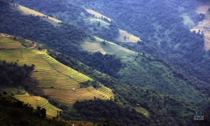 terrace-paddy-field-photo-nagaland
